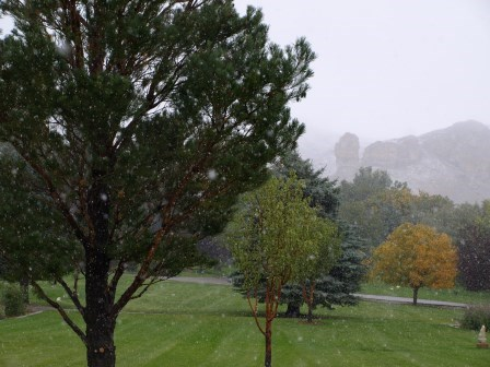 Tree, Green, and Snow