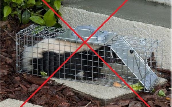 Need a Skunk Trap?.jpg